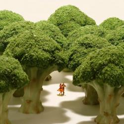 Forêt de brocolis